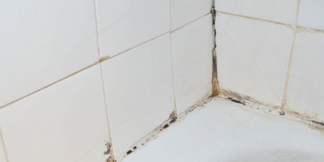 11 most common places to check for mold in your home molekule blog