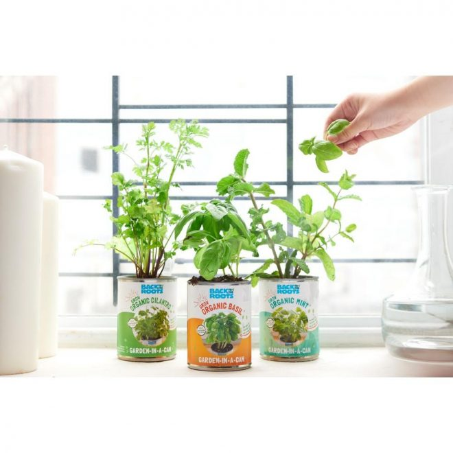 back to the roots basilcilantromint grow kit herb garden 3 pack