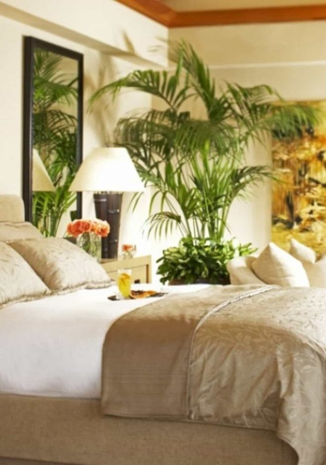 bright tropical bedroom with wall mirror and palm tree houseplant in