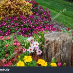 colorful flower bed against green grass stock photo edit