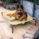 coolaroo elevated pet bed desert sand