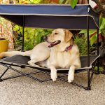 elevated mesh dog bed outdoor raised cat pet cot canopy