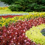 flowerbed with different flowers and decoration on grass