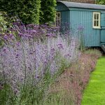 garden with lawn flowerbed with lavender and blue vardo in d1024107189