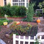 karens no lawn front yard in california finegardening