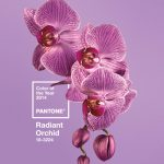 pantones color of the year for 2014 radiant orchid pied type