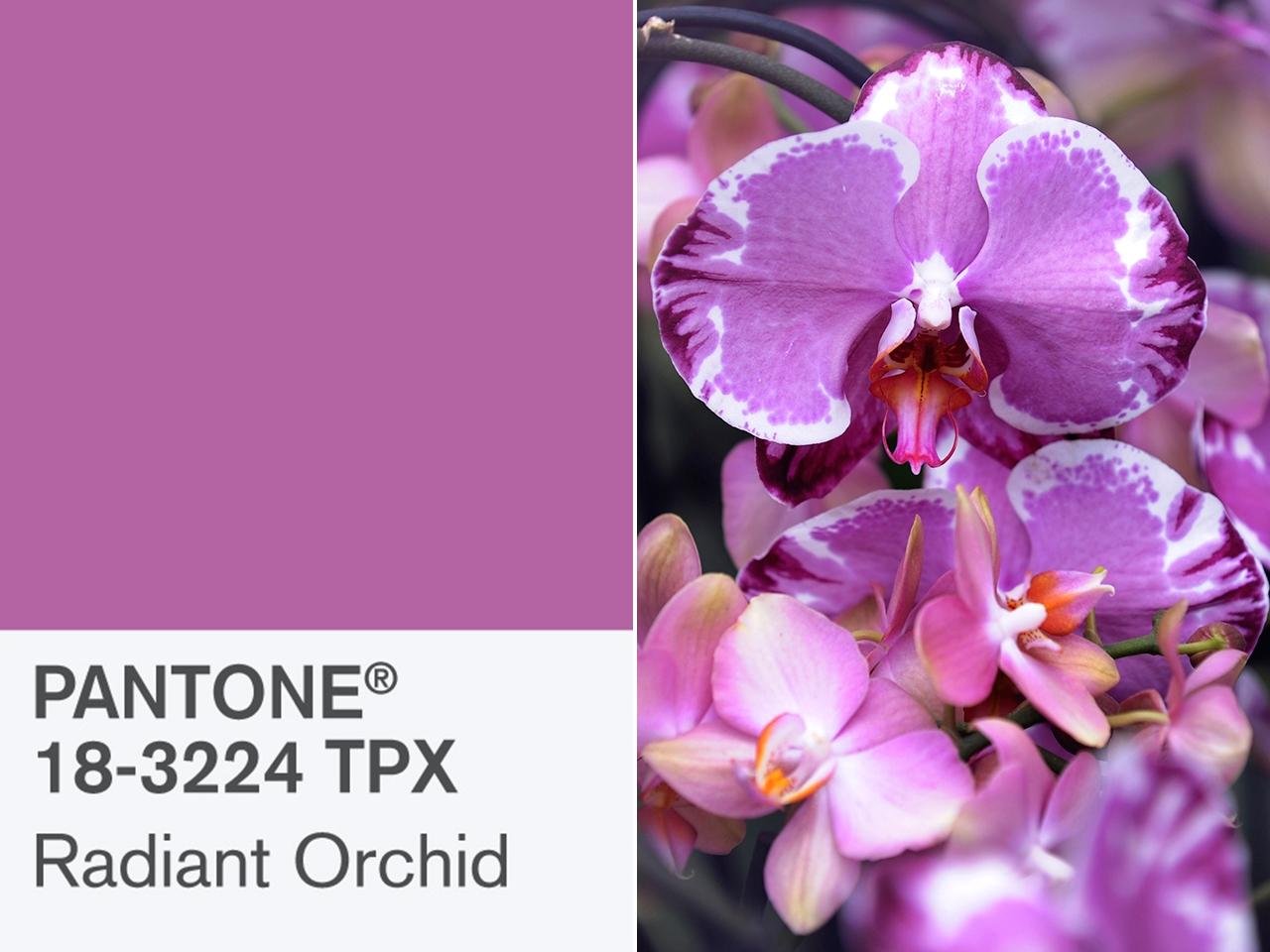 pantones radiant orchid is 2014s color of the year